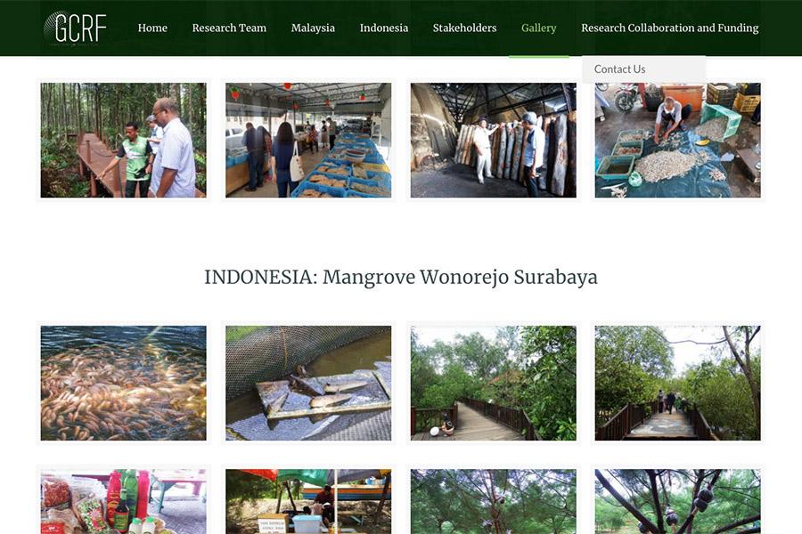 mangrooveecosystem-03